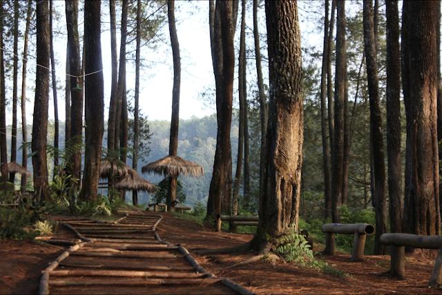 wisata hutan pinus cikole pal 16