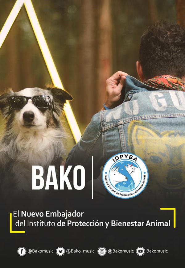 Bako-embajador-instituto-protección-bienestar-animal