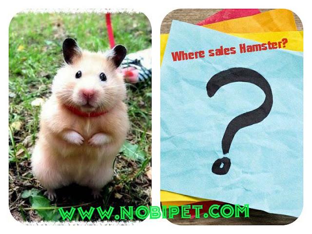 noi-ban-chuot-hamster-o-da-nang-gia-re-nhat