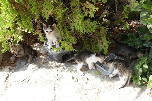 Katzenbabies bei den Ruinen von Phaistos, Kreta