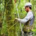 [DOWNLOAD] Manual para coleta de dados em Inventário Florestal