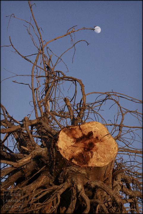 naturaleza,tronco,arbol,limites,luna,serie,arte,murcia,las-palas,fotografia