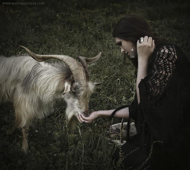 A friendly Male Goat, Akerra