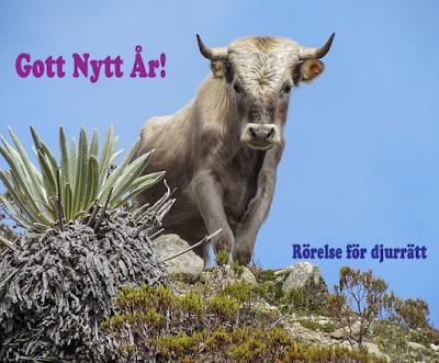 Gott Nytt År! - Rörelse för djurrätt