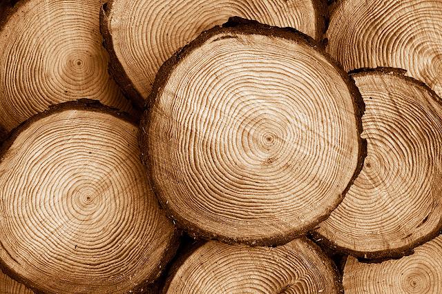 kayu jati belanda log
