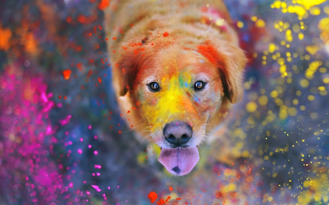 Happy Holi 2018 Images Free download In Full HD