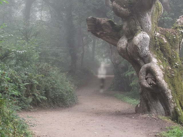 A path winds through a forest