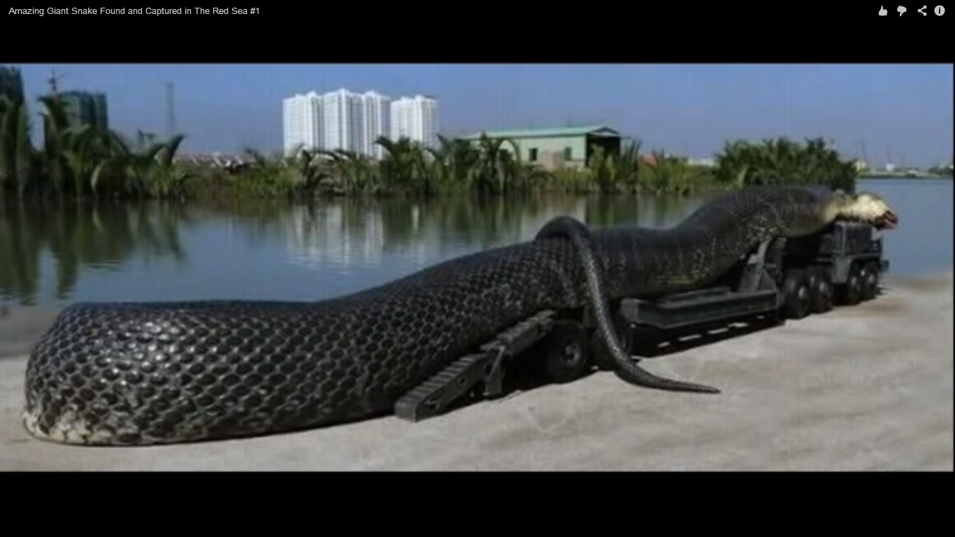 Guinness: India Park Home to World's Largest Crocodile; 23 Feet