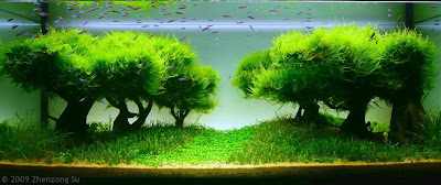 Beautiful Guppy Or Tetra Aquascape