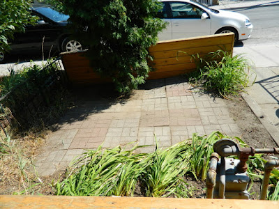 Brockton Village summer garden clean up after by Paul Jung Gardening Services Toronto