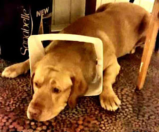 Dog Catches Treat On Head