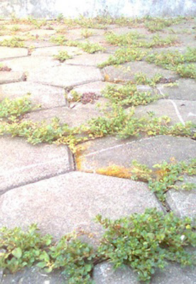 Akibat Menggunakan Paving Block untuk Halaman Rumah