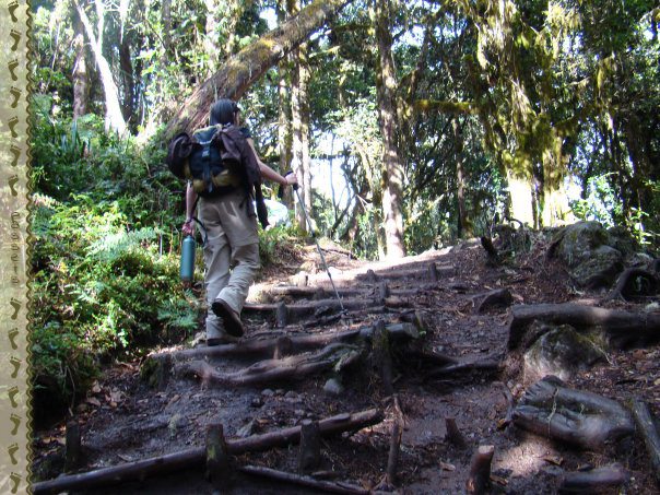 Ascenso a Machame Hut