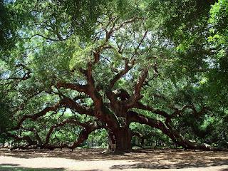 Pembangkit Listrik Tenaga Tanaman atau Pohon