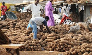 Nigerian yam for export to UK, US next week