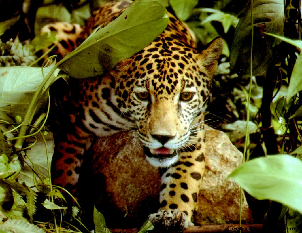 Tropical Rainforest Native Flowers And Animals