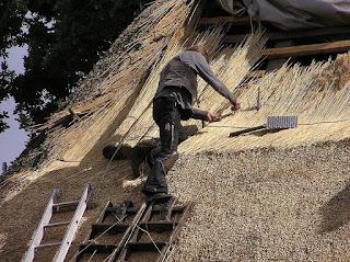 An apprentice thatcher