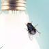 لماذا تنجذب الحشرات نحو الضوء ؟