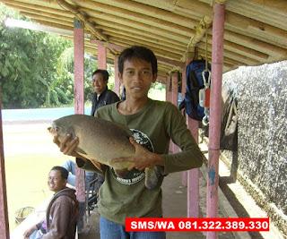 Essen Ikan Bawal Galatama Siang Hari