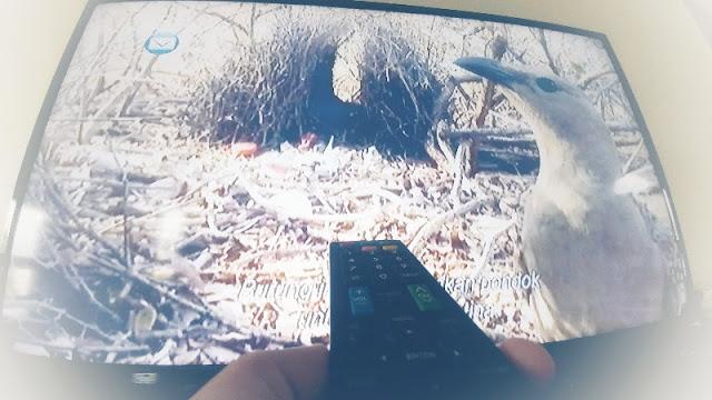 cara setting HP untuk remote TV