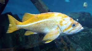 Image 1: Fish become lazy and sluggish in summer days.