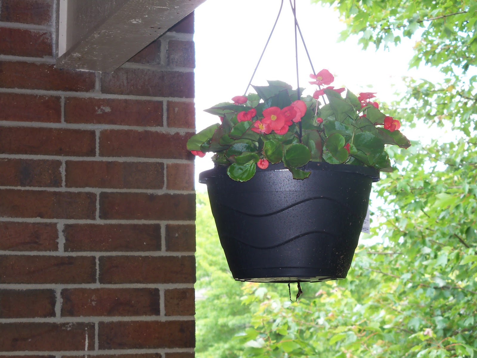 Who Has Hanging Flower Baskets On Sale : Ozarks sew n sews miss me