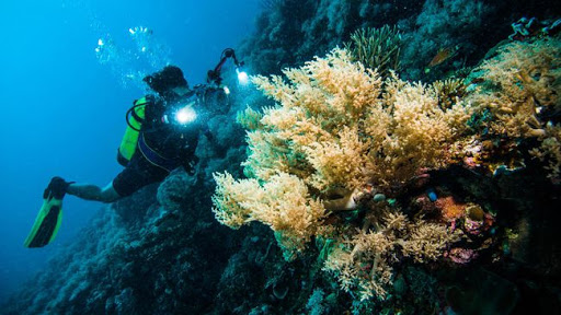 Buton Island scuba diving destination