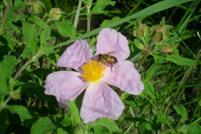 beautybee.jpg