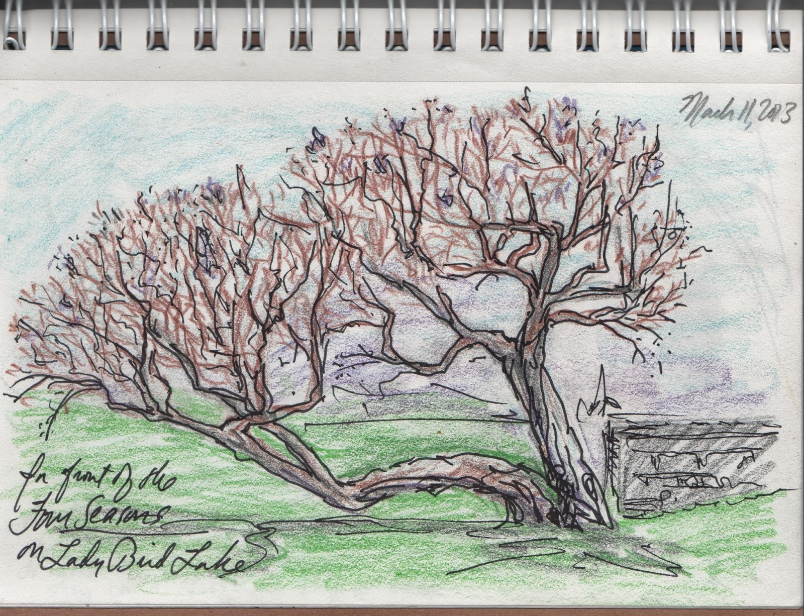 sketch of tree by David Borden