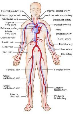 Scientist Of Social Organ Penyusun Sistem Peredaran Darah