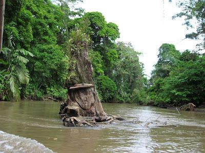 Arte , vegetación, río Tortuguero, Costa Rica, vuelta al mundo, round the world, La vuelta al mundo de Asun y Ricardo, mundoporlibre.com