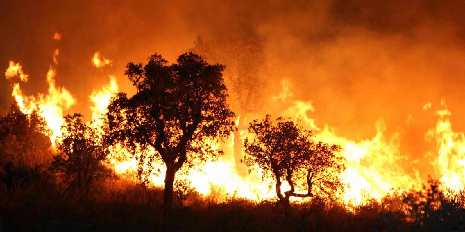4 Negara Dengan Kebakaran Hutan  Terbanyak Di Eropa KASKUS