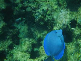 sosua reef