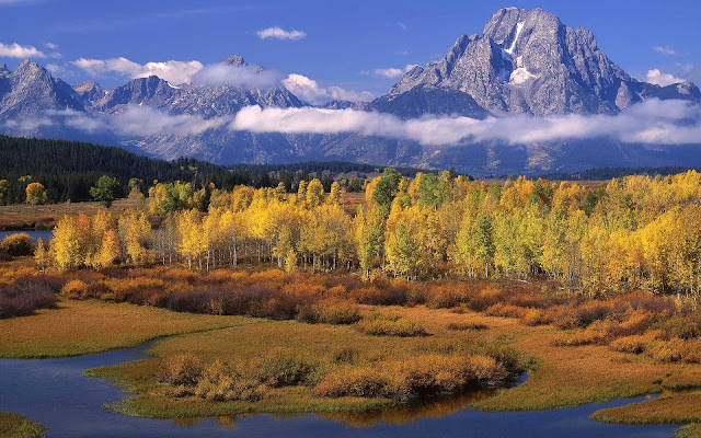 Landschap met bos en bergen