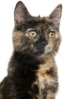 A study shows cats and their people share personality traits