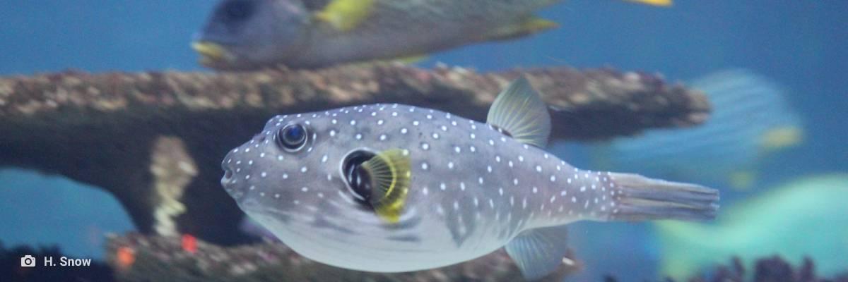 emerson barros aguiar porto portugal vegetariano vegano peixe mariscos ambiente de leitura carlos romero