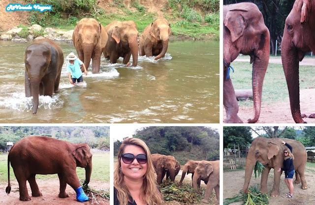 Elefante em Chiang Mai