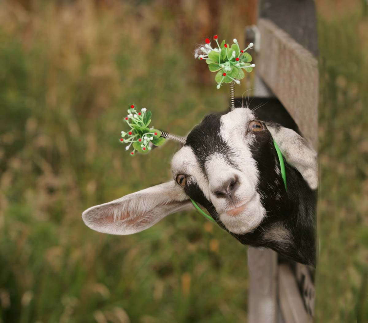 Funny animals of the week - 18 January 2013 (25 pics ...