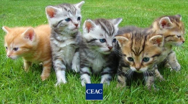 ¿Cómo es el curso de auxiliar de veterinario?