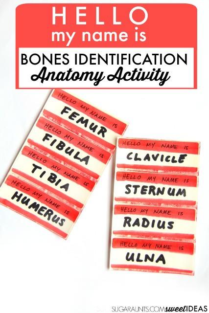 Bone Identification Movement Activity The Ot Toolbox