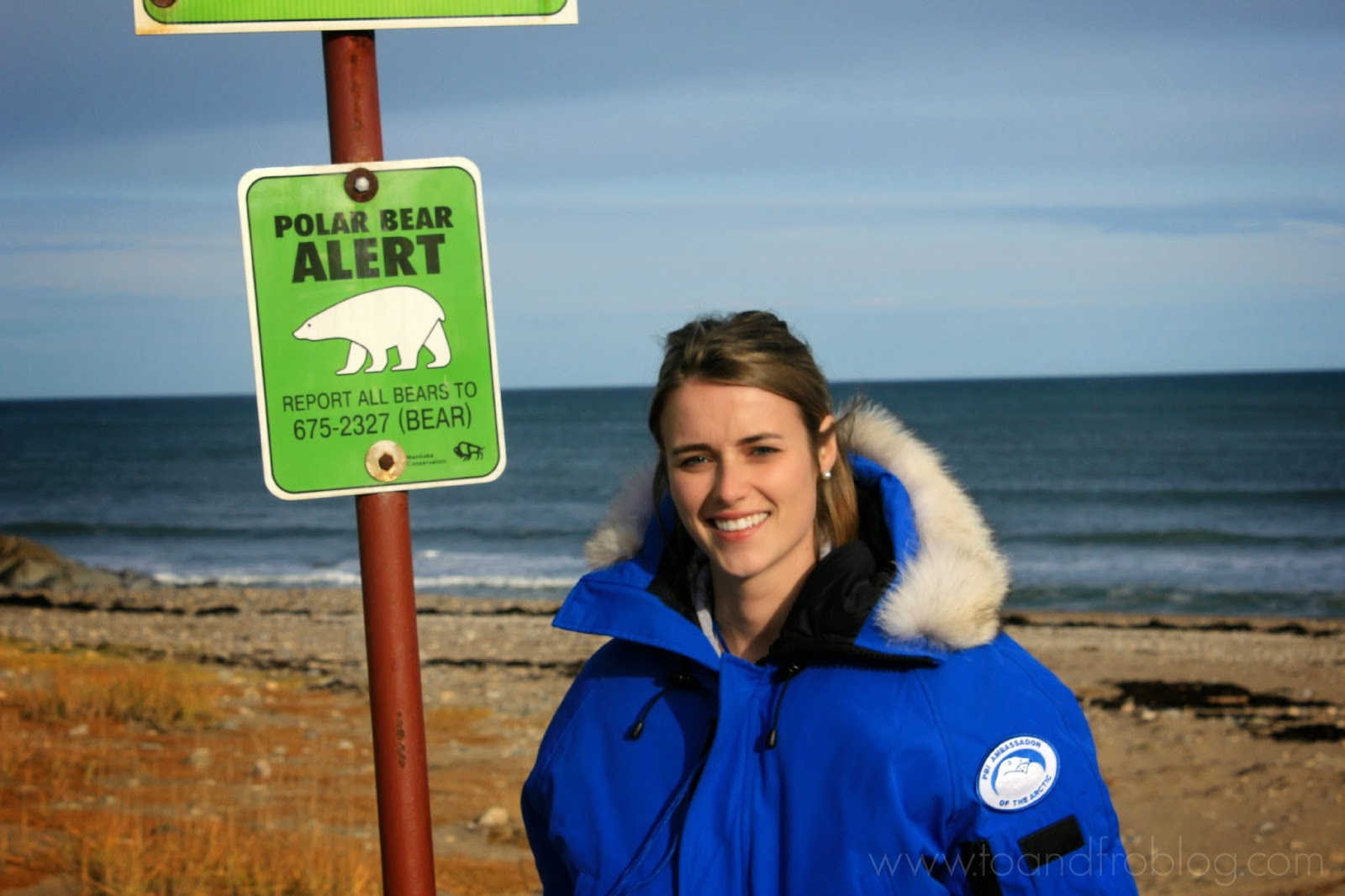 visiting the polar bears in Churchill, Manitoba