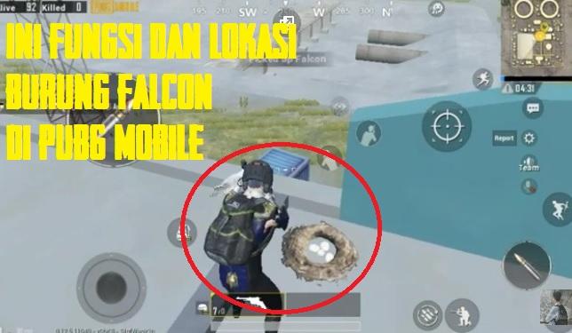 Fungsi Burung Falcon di PUBG Mobile Dan Lokasinya