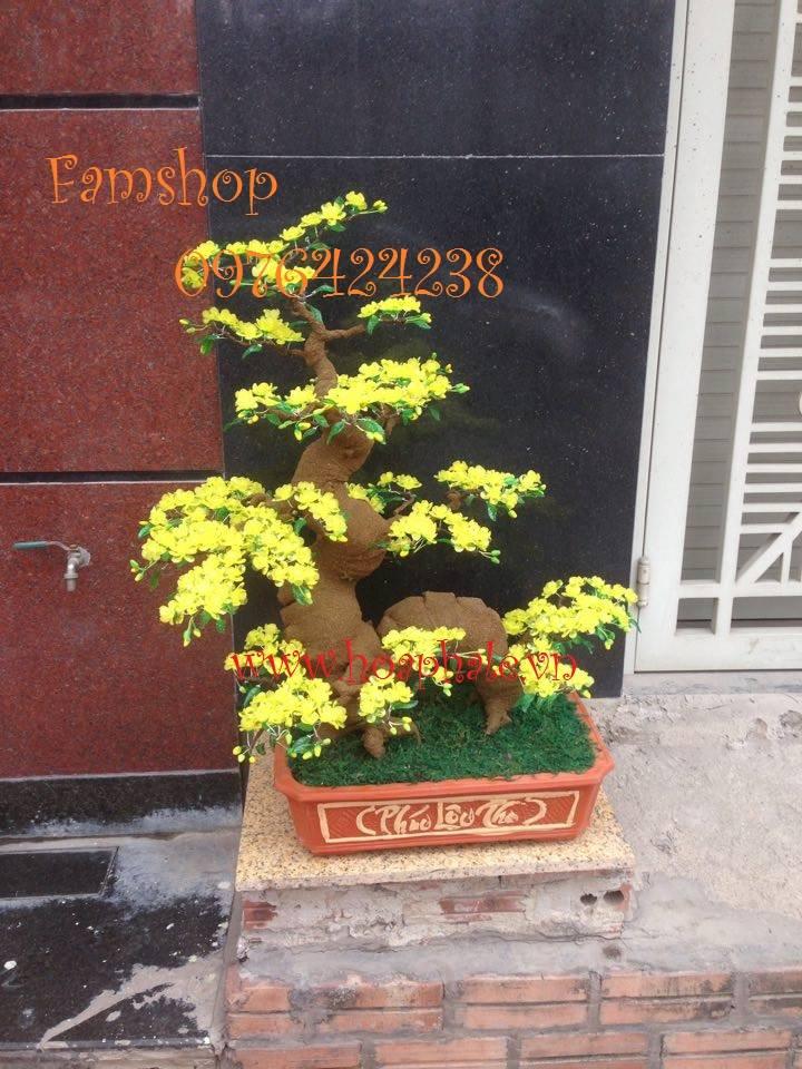Goc bonsai mai dao tai Giang Vo