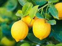 The Benefits of Lemon for Health and Beauty