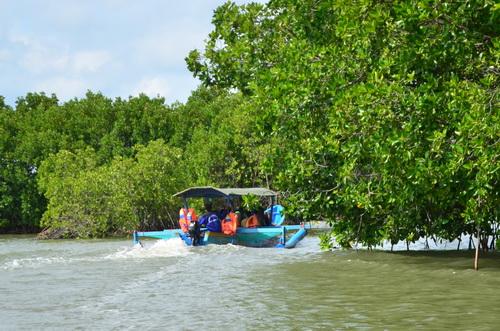 Perahu Hutan Mangrove Pandansari Brebes