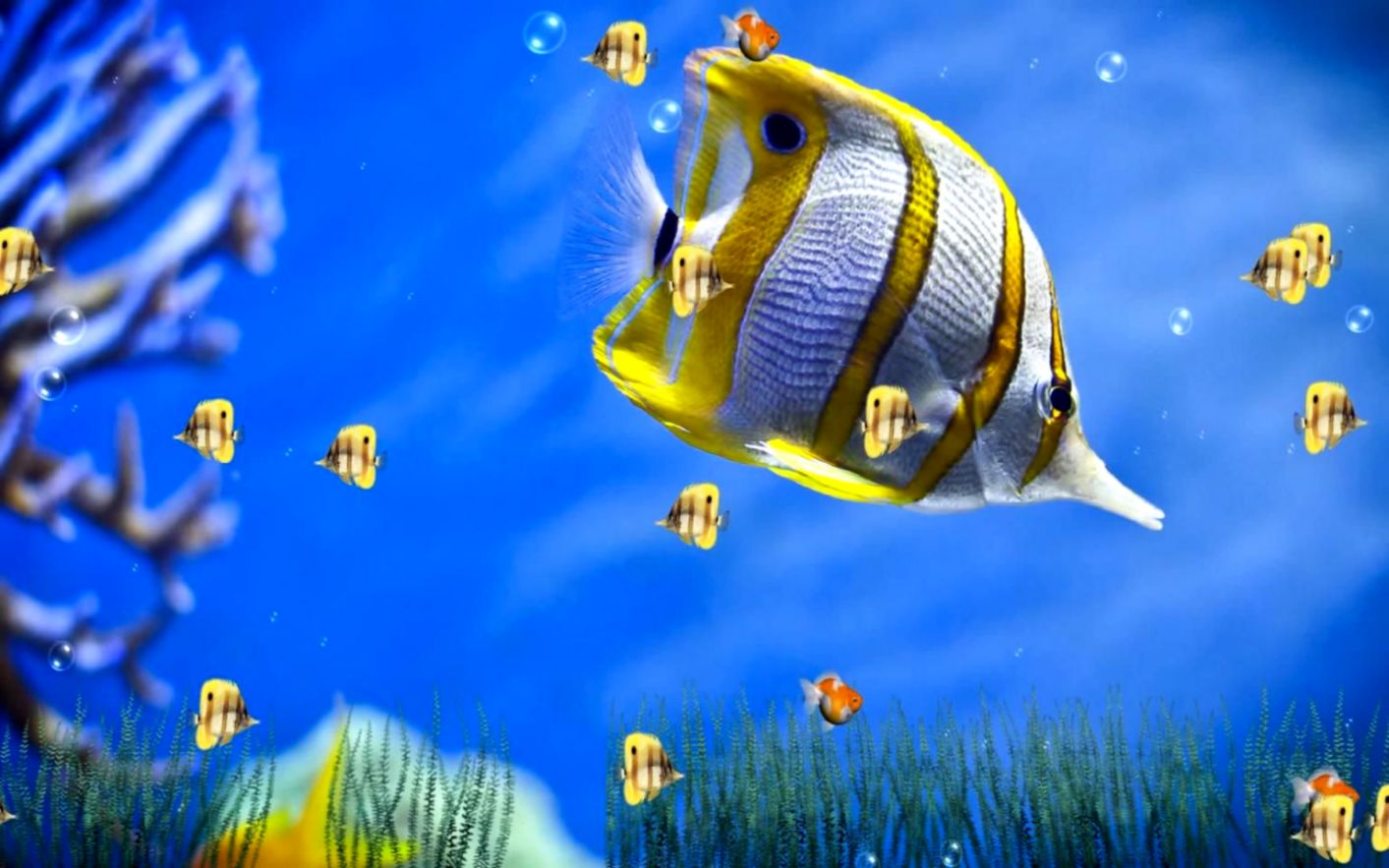 Perfect Decoration Moving Fish Wallpaper Backgrounds Free No
