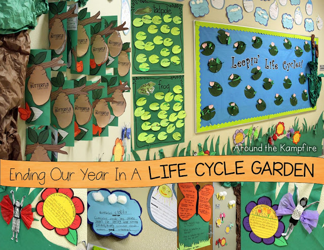 Frogs, butterflies, and insects life cycle garden hallway display
