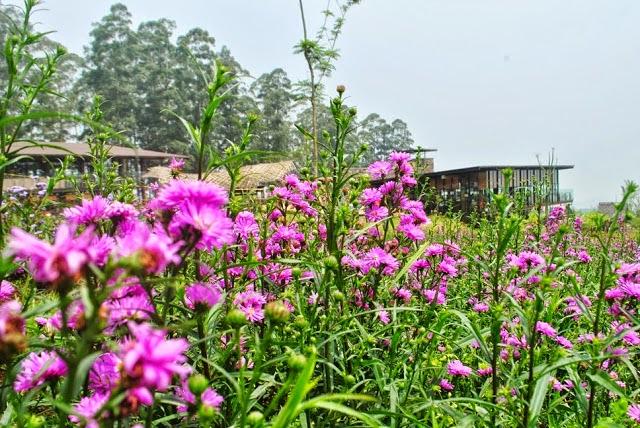 Arimbi Garden
