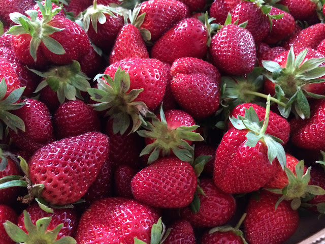 U-pick Strawberries at Wabi Sabi Farm outside of Charleston, SC | The Lowcountry Lady