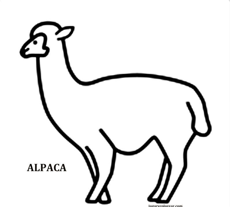 Fauna Chilena Para Colorear Dibujos Colorear